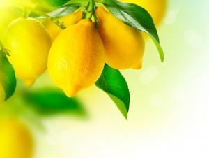 citroner i träd
