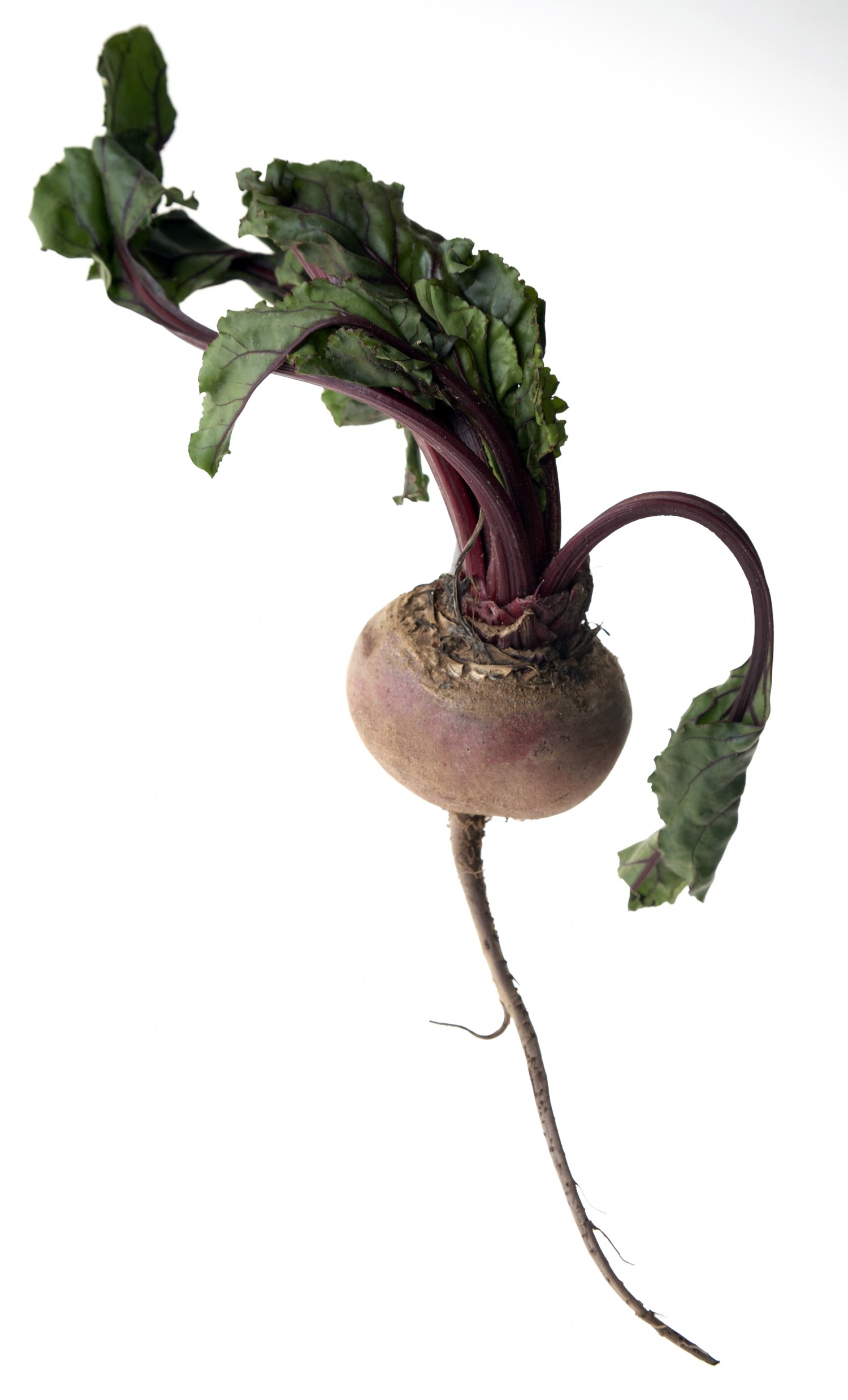 Beetroot with leaves and roots on white background